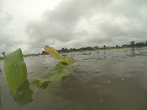 """Un damnificado """"bueno"""": perder todo el cultivo en Quintana Roo"""